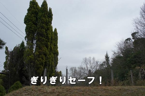 DSC0935720130321.jpg