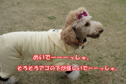 DSC0970420130330.jpg