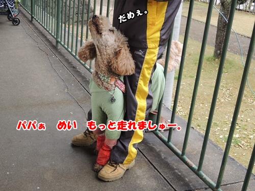 DSCN042920130423.jpg