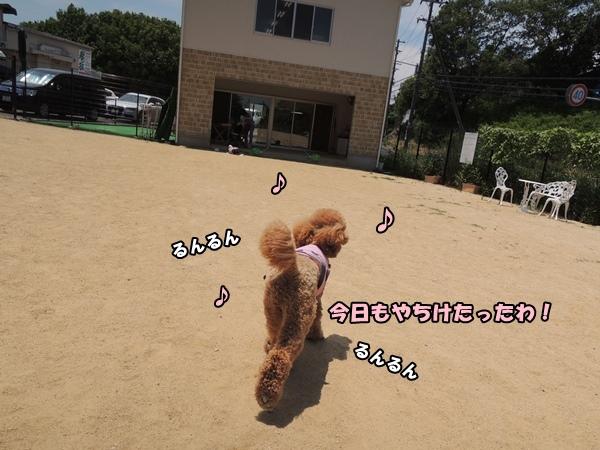 DSCN163620130614.jpg