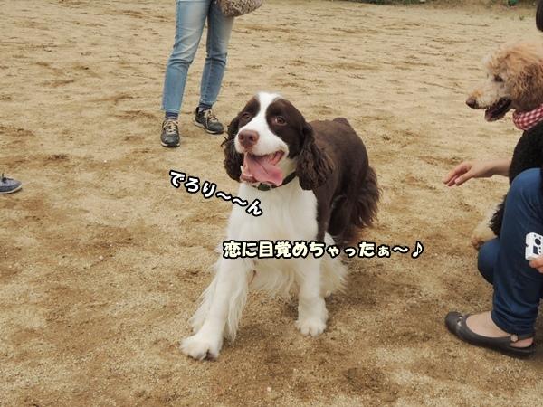 DSCN194020130625.jpg