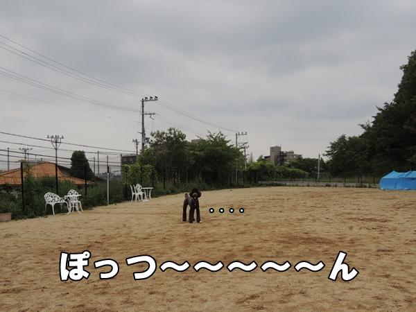 DSCN195120130625.jpg