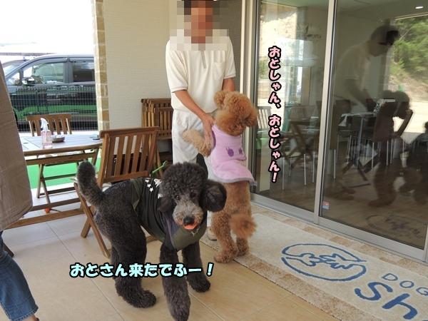 DSCN270020130713a.jpg