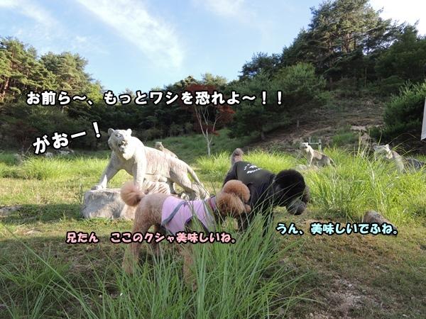 DSCN306520130722.jpg