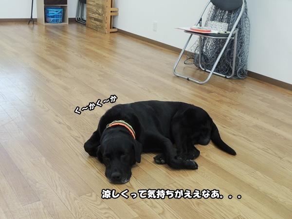 DSCN318020130726.jpg