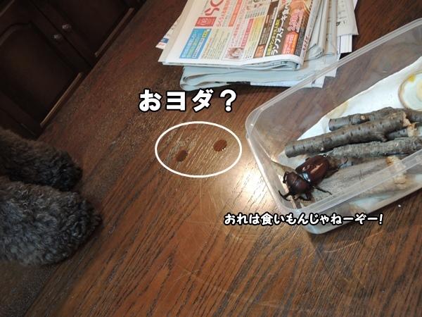 DSCN324820130727a.jpg