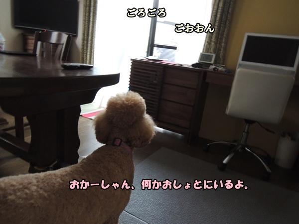 DSCN383520130806.jpg