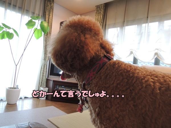 DSCN386920130806.jpg