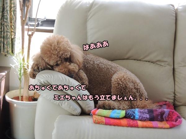 DSCN400720130809.jpg