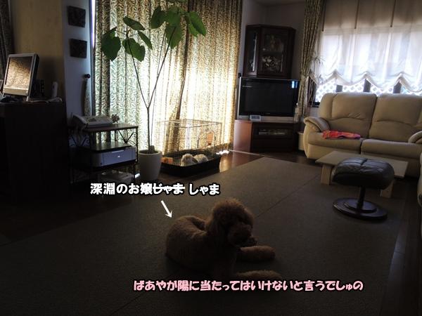 DSCN423220130813.jpg
