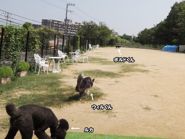 DSCN427920130815.jpg