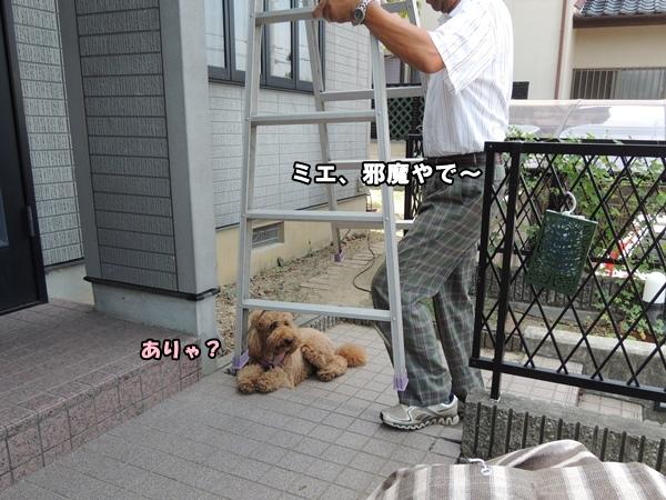 DSCN438520130819.jpg