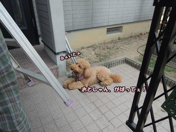 DSCN438620130819.jpg