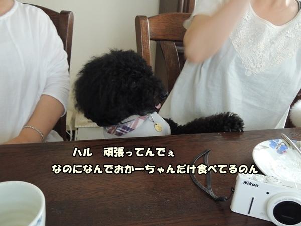 DSCN455720130820.jpg