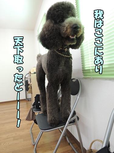 DSCN464120130822.jpg