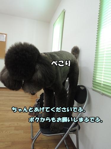 DSCN464220130822b.jpg