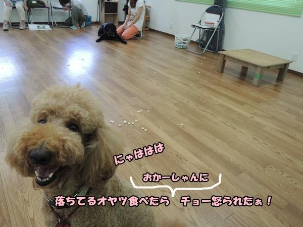 DSCN464720130822.jpg