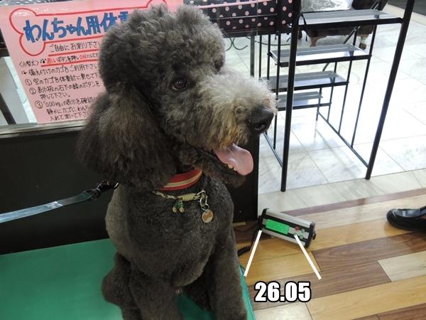 DSCN487620130829.jpg