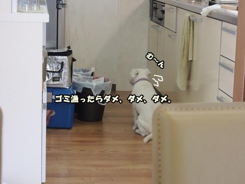 DSCN491720130830.jpg