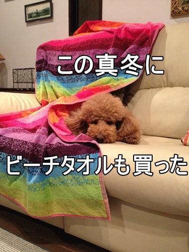 IMG_167820130110.jpg