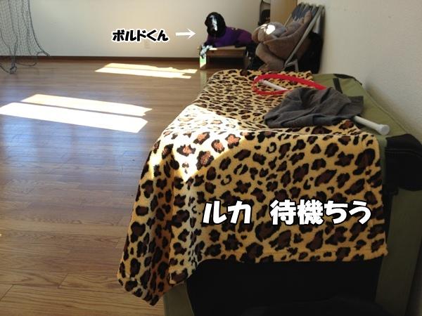 IMG_180420130124.jpg