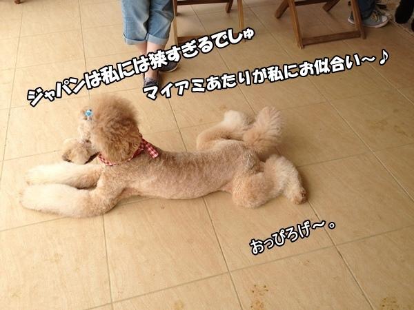 IMG_280920130612a.jpg