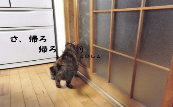DSCF0135_convert_20120213175716.jpg