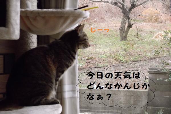 DSCF0211_convert_20120207120827.jpg