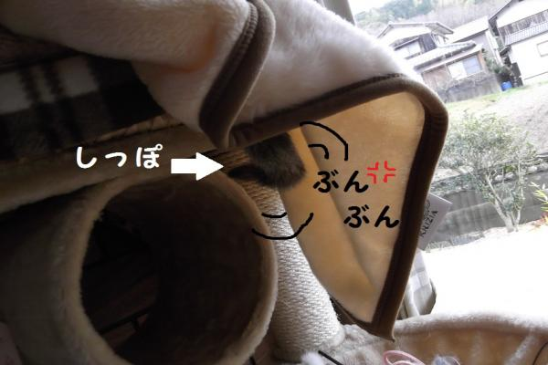 DSCF0215_convert_20120207140122.jpg