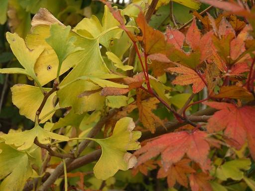 Fall15.jpg