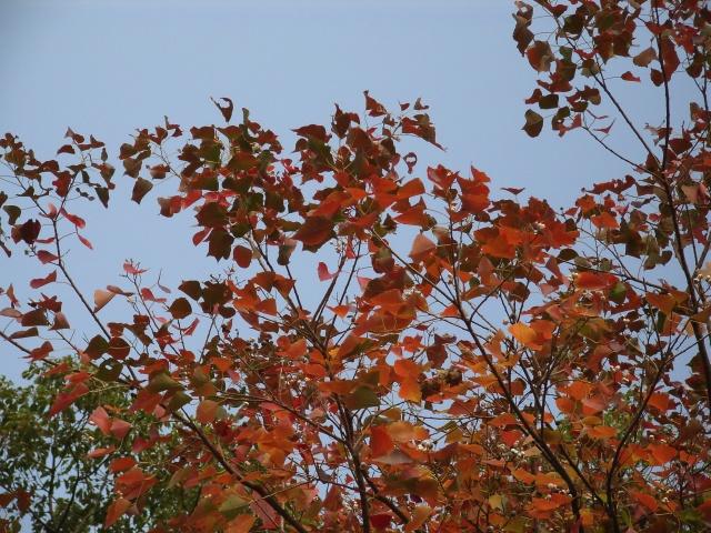 Fall17.jpg