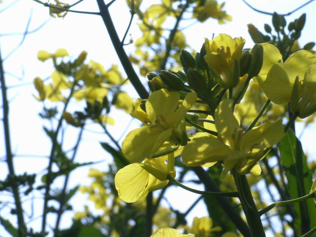 FloralColors21.jpg