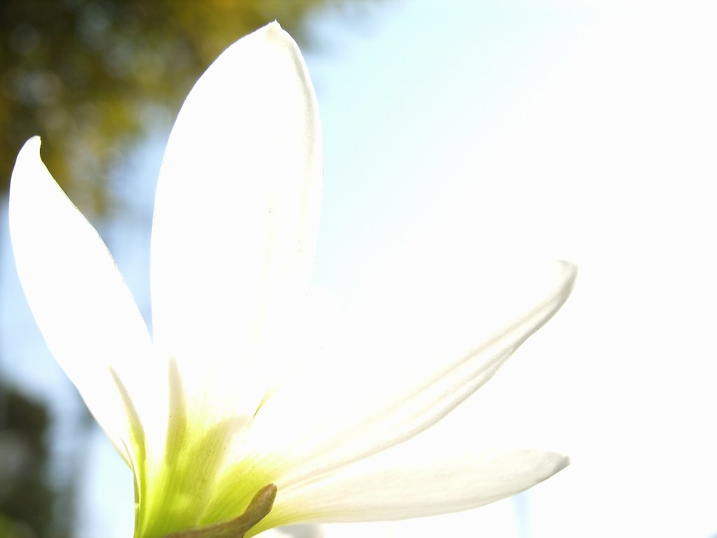 FloralColors22.jpg