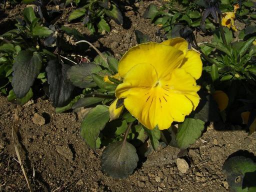FloralColors23.jpg