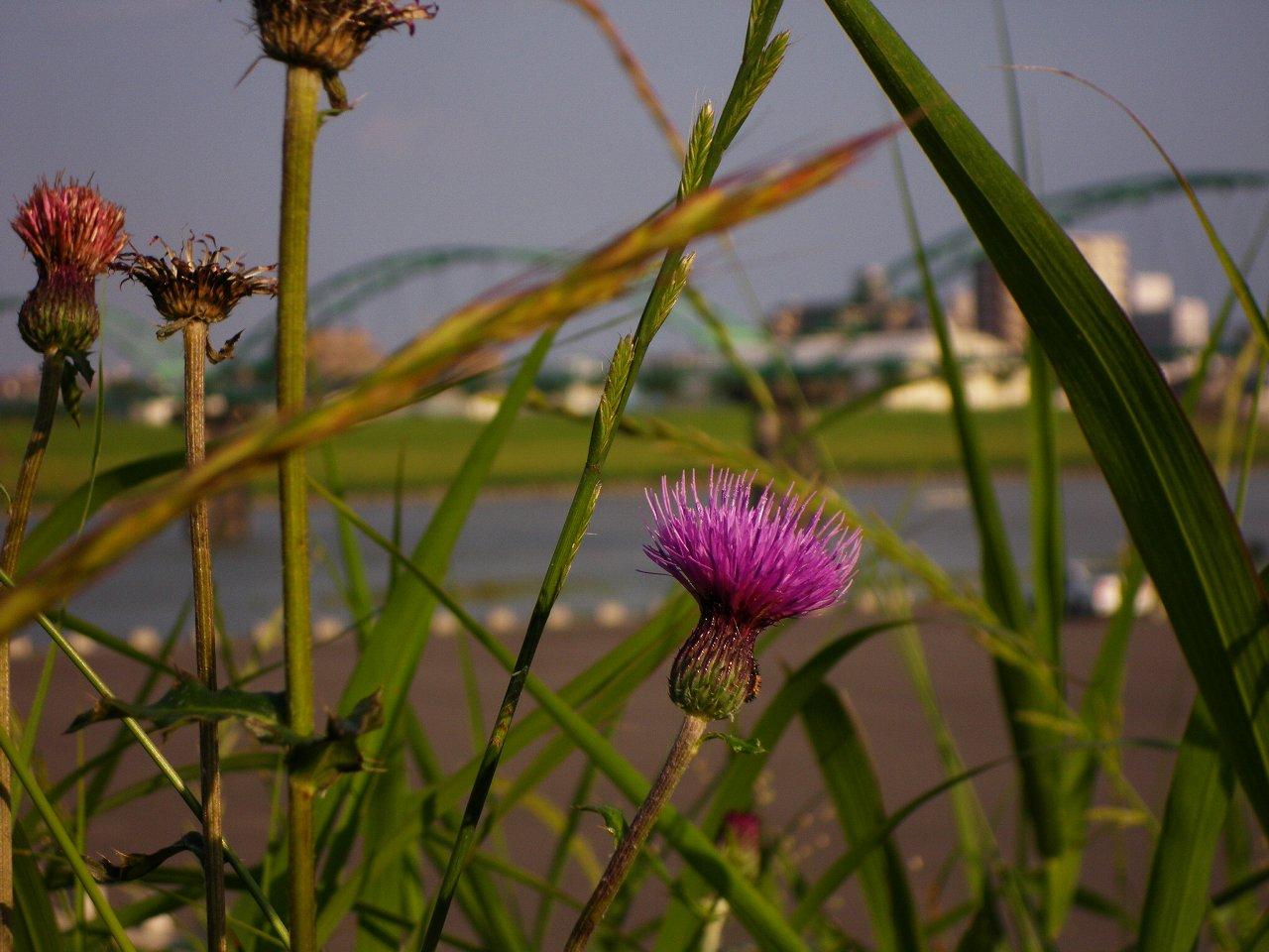 FloralColors24.jpg