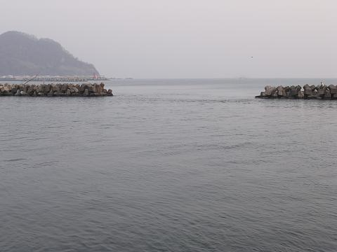 古平川河口 鮭釣り5
