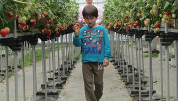 strawberries130327.jpg