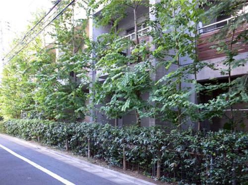 20110713目白の集合住宅植栽管理後西側