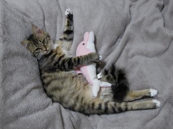 ピンクイルカと。