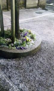 雪、始まる