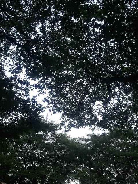 20110814kouen2.jpg