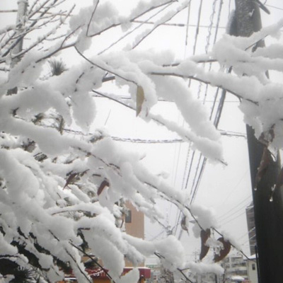 20111226雪