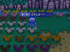 お花どうしましょ