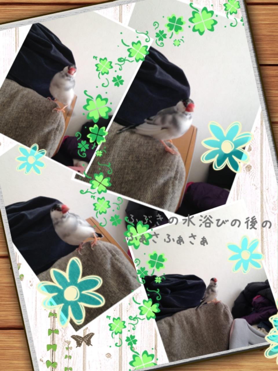 image_20130120093924.jpg