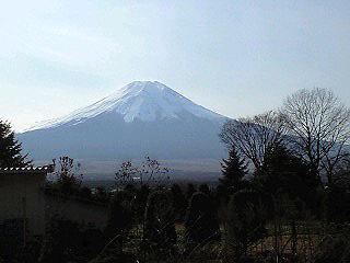 2010araya1.jpg