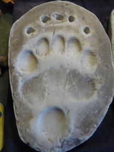 bearfoot2.jpg