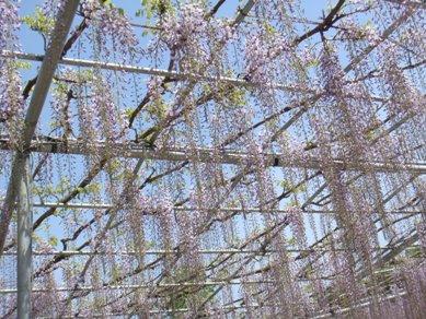 flower park 056