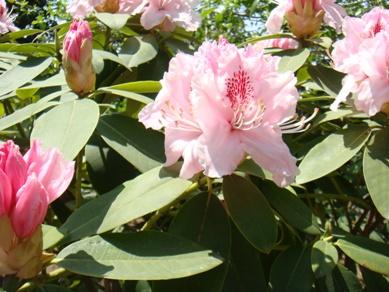 flower park 022