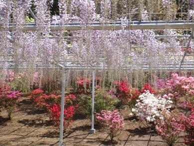 flower park 046