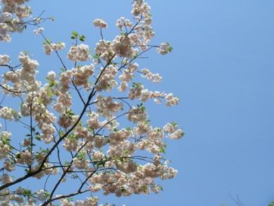 flower park 035